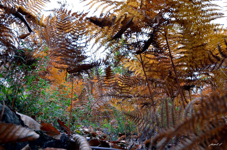 couleurs d'automne 10