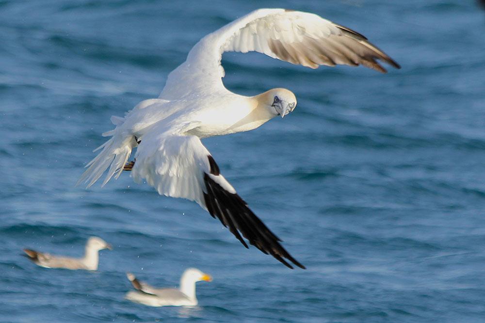 oiseaux m 11