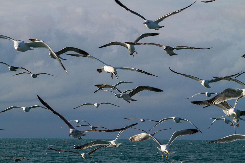 oiseaux m 3