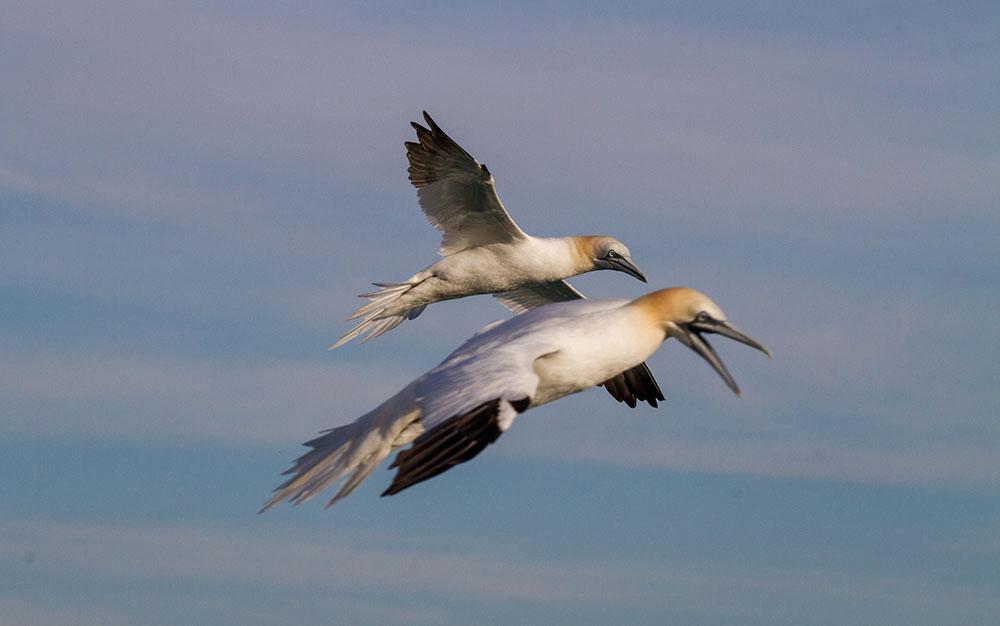 oiseaux m 5