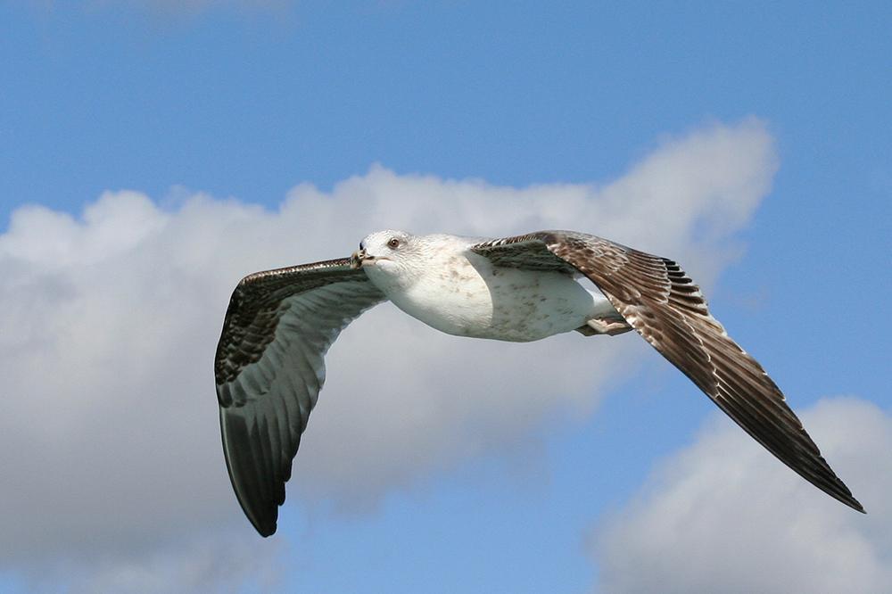 oiseaux m 9